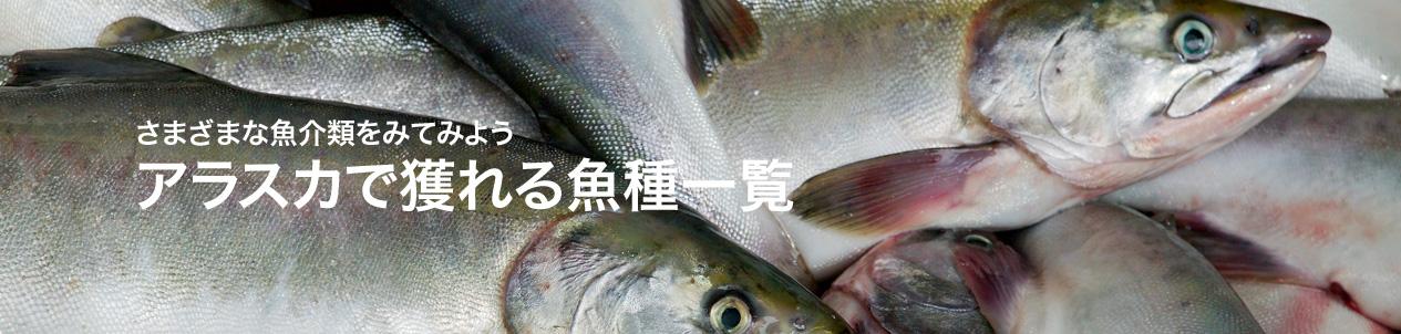 アラスカで獲れる魚種一覧